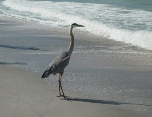 Sanibel and Captiva Islands