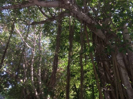 Sanibel and Captiva Islands